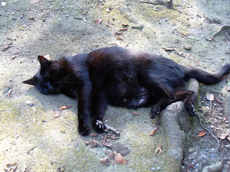 寝入ってる黒猫2