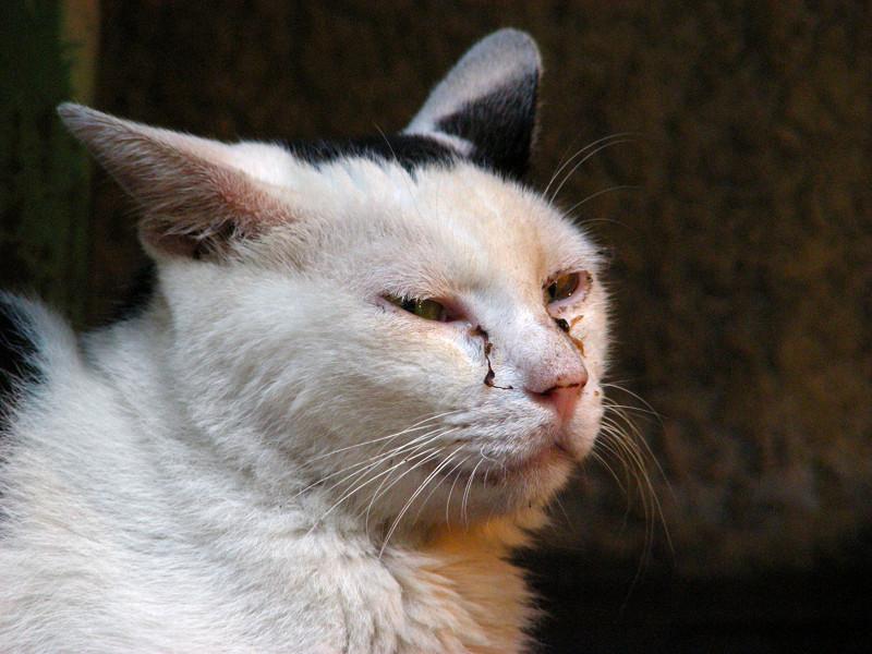 茶色タイルと白黒猫3