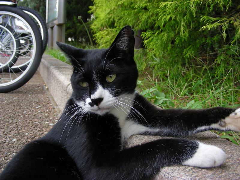 縁石に寄り掛かる黒白猫3
