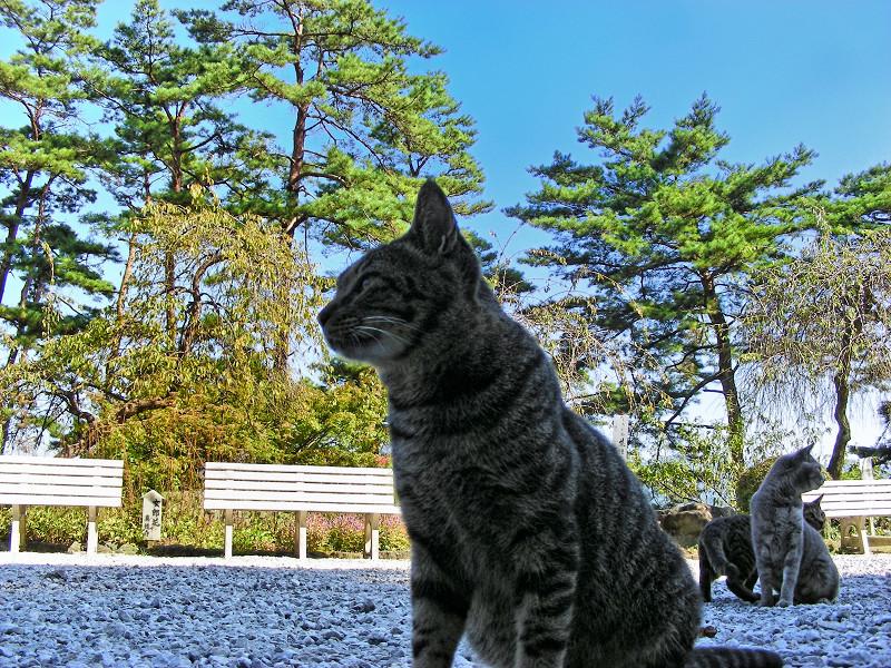 玉砂利と猫3匹3