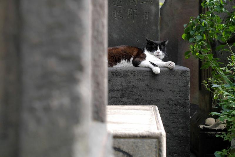 石碑で寛ぐ黒白猫1