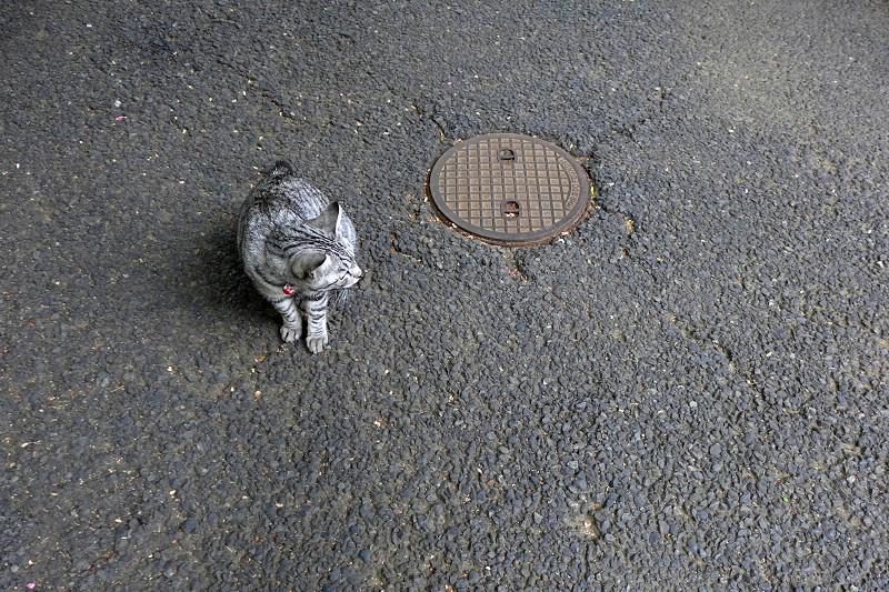 サバトラ猫のハイアングル1
