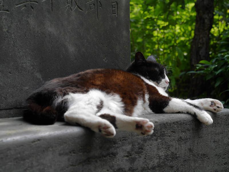 石碑で寛ぐ黒白猫2