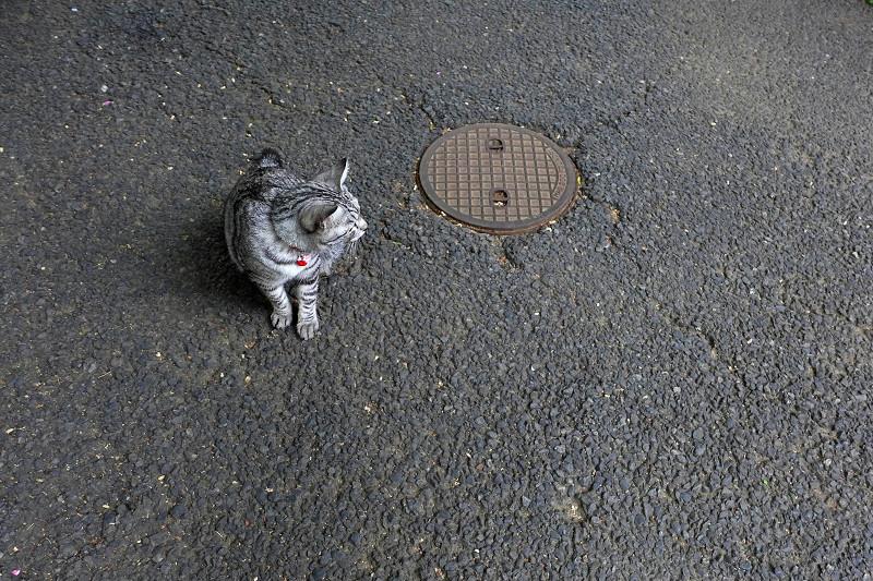 サバトラ猫のハイアングル2