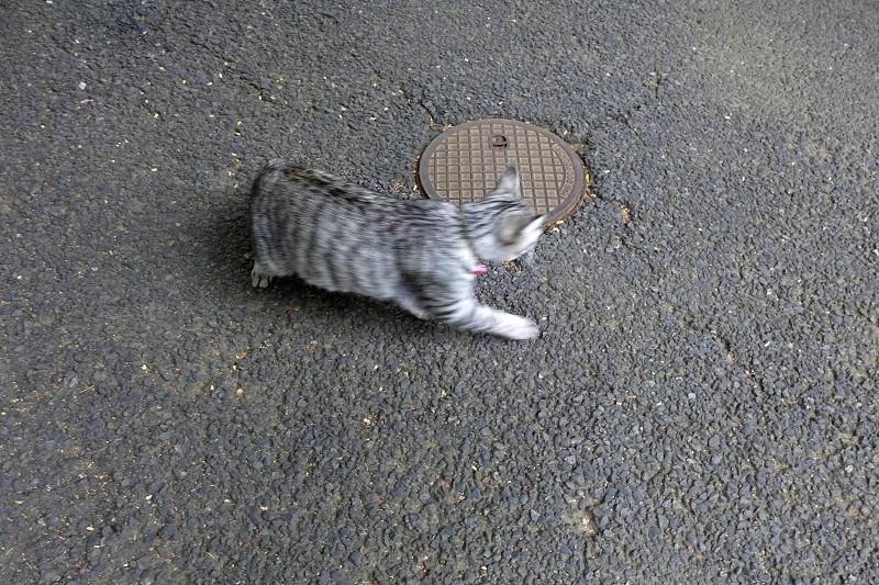 サバトラ猫のハイアングル3
