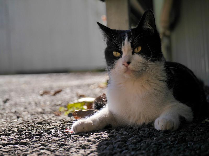 壁の下で後退りする黒白猫1