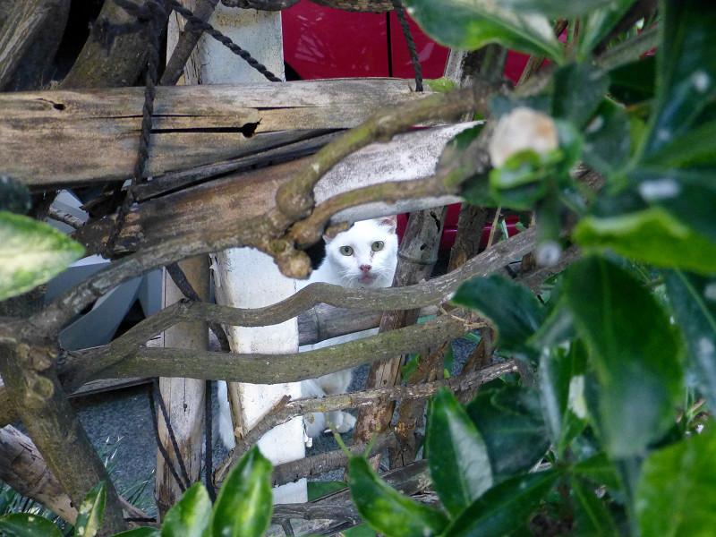 雑多なものと白猫1
