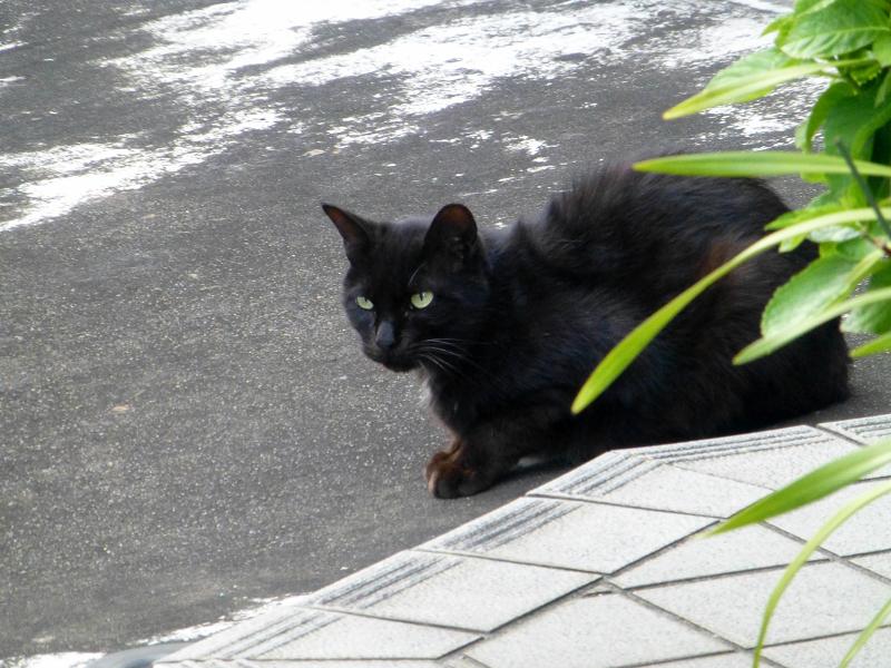 臆病な黒猫1