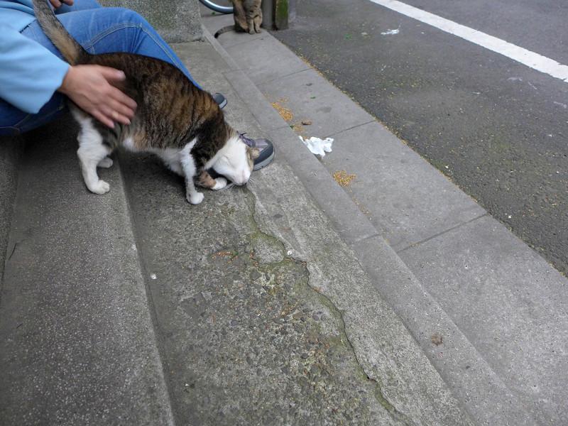 腰トントンとキジ白猫1