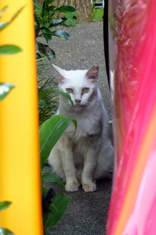 雑多なものと白猫2