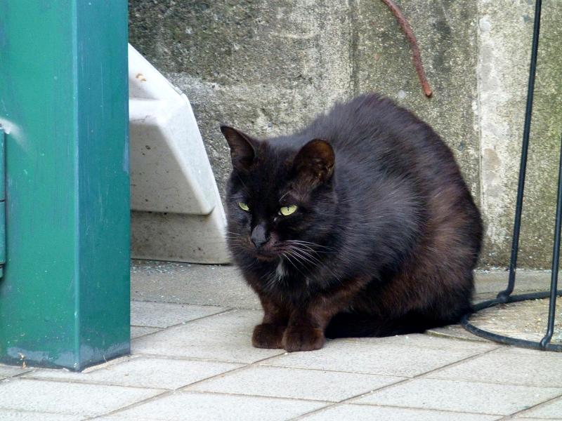 臆病な黒猫2