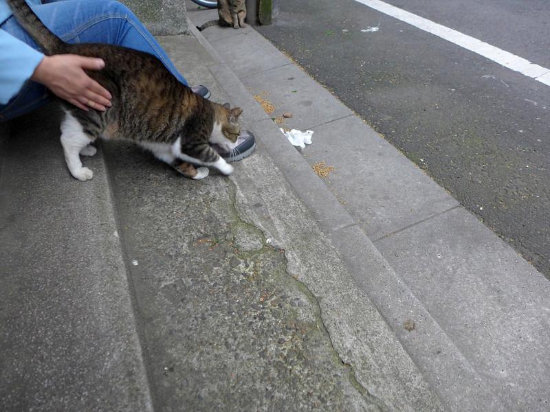 腰トントンとキジ白猫2