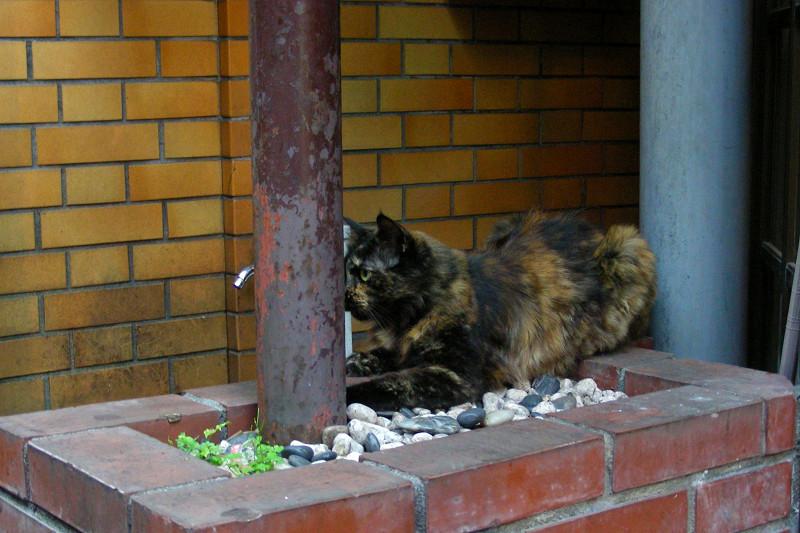 赤煉瓦と錆柄猫1