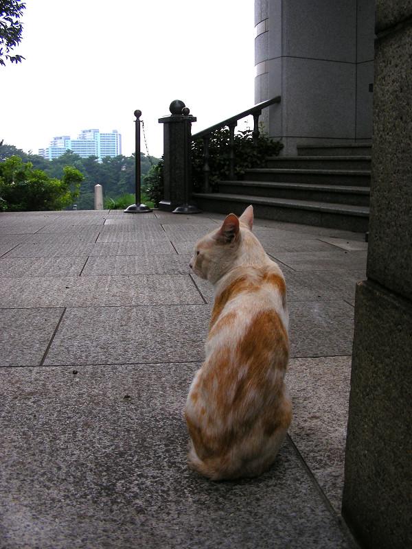 背中を見せている茶白猫1