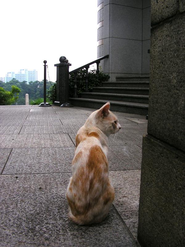 背中を見せている茶白猫2