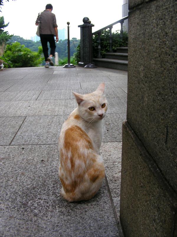 背中を見せている茶白猫3