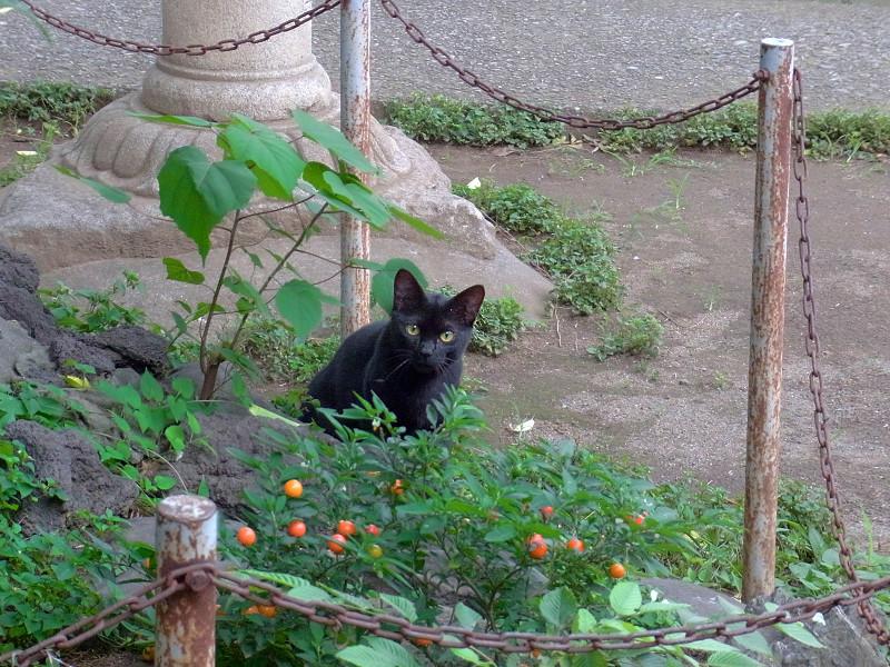 石灯籠と黒い猫