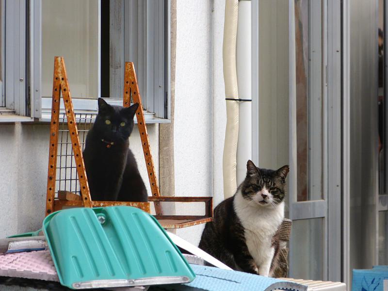 窓のところの猫たち1