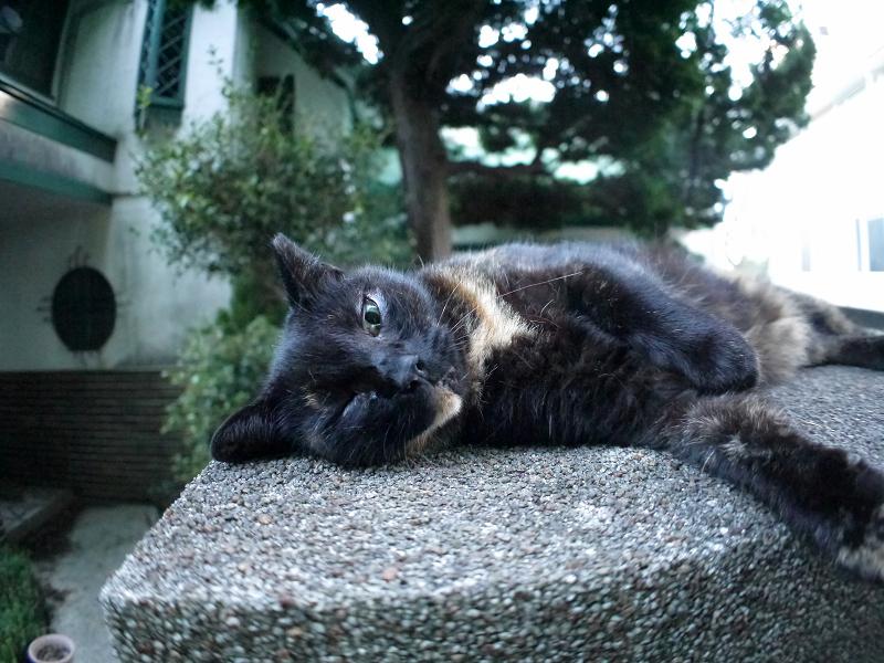 門柱の上で思案中の黒サビ猫1