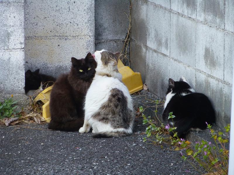 角っこの猫たち1