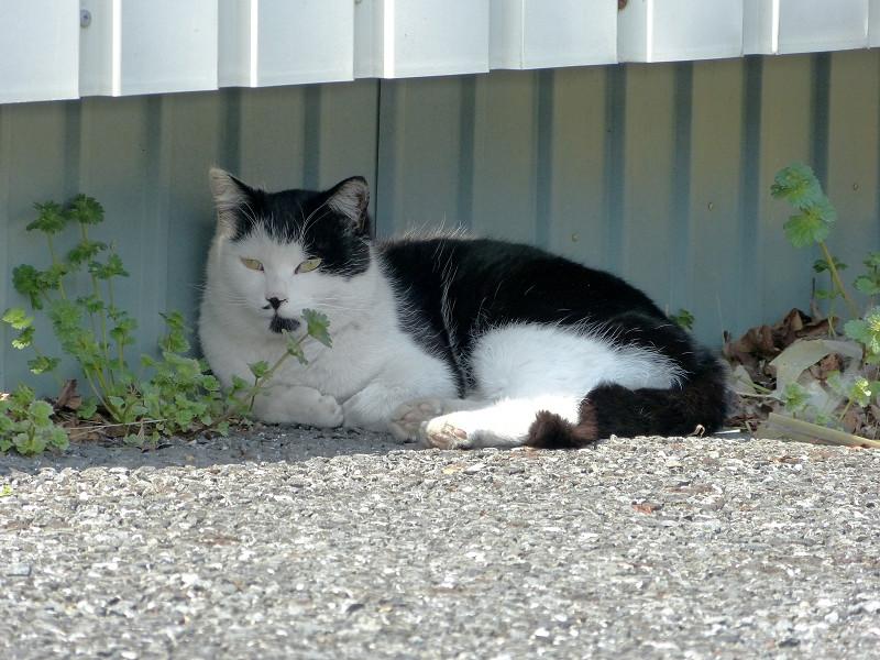 壁の隙間の白黒猫2