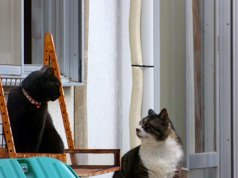窓のところの猫たち2
