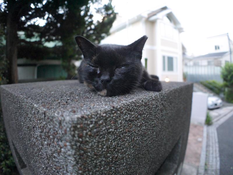 門柱の上で思案中の黒サビ猫2