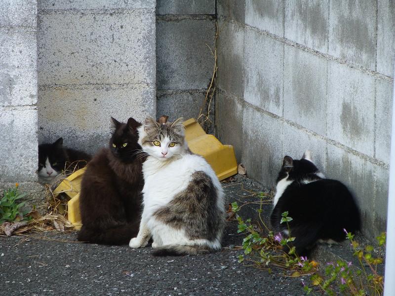 角っこの猫たち2