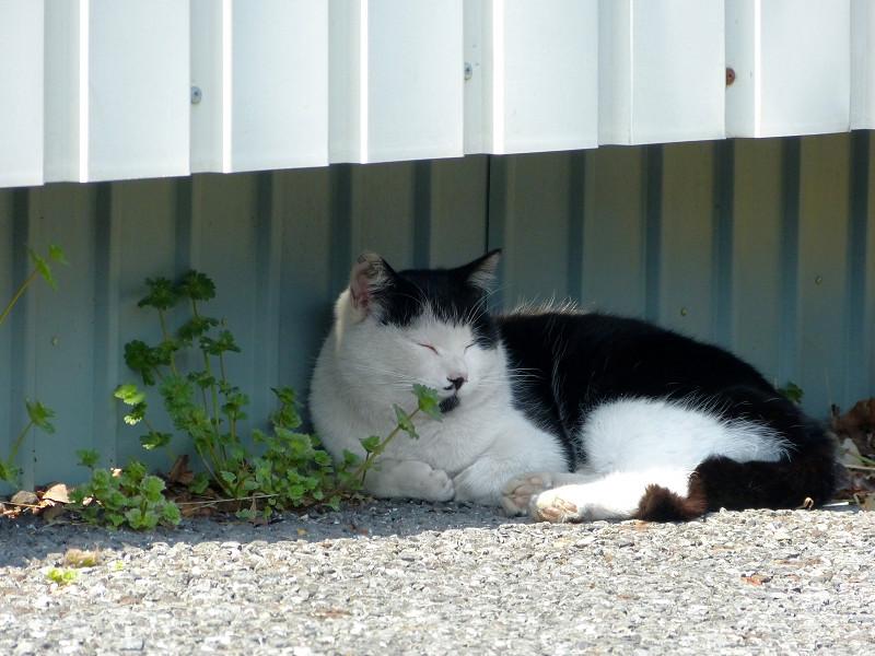 壁の隙間の白黒猫3