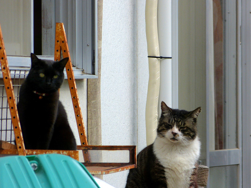 窓のところの猫たち3