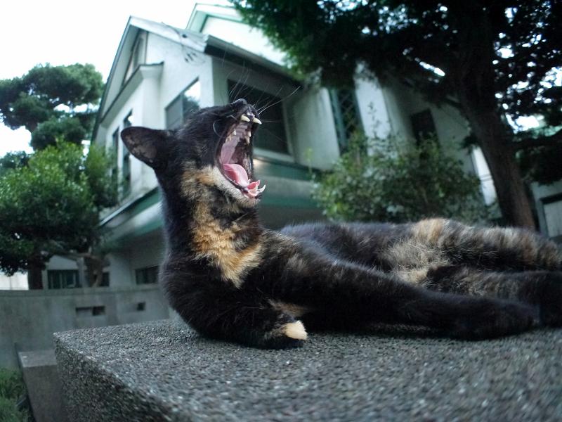 門柱の上で思案中の黒サビ猫3