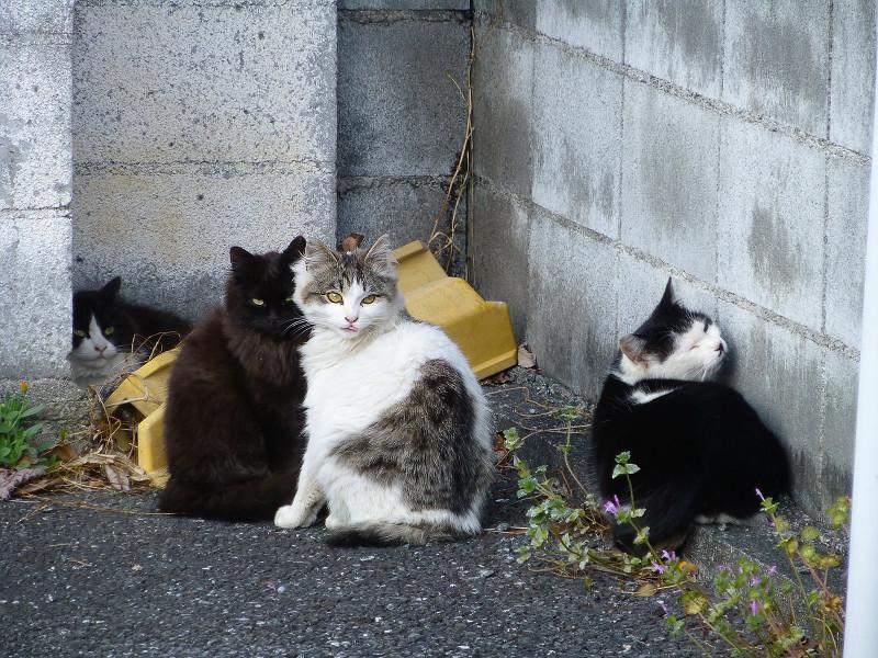 角っこの猫たち3