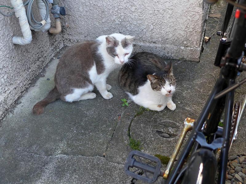 隅っこの猫たち2
