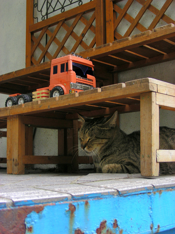 ベンチの下のキジトラ猫1