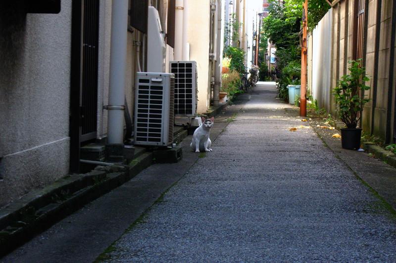 路地で出会った猫