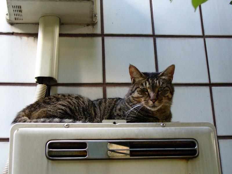 ガス室外機とキジトラ猫