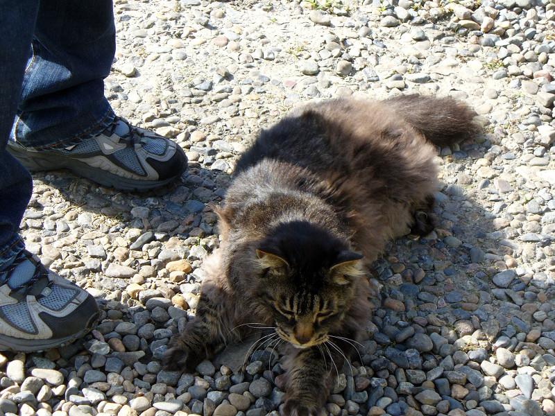 足元の毛長の黒猫1