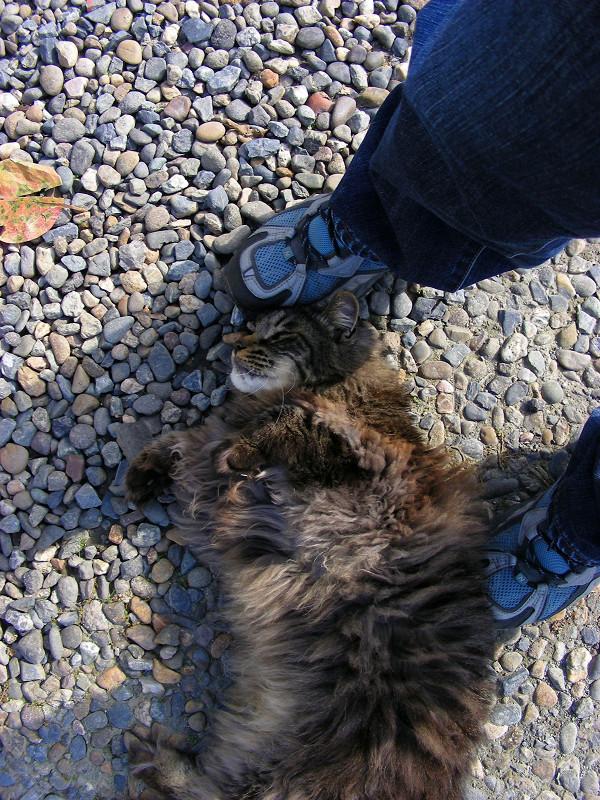 足元の毛長の黒猫2