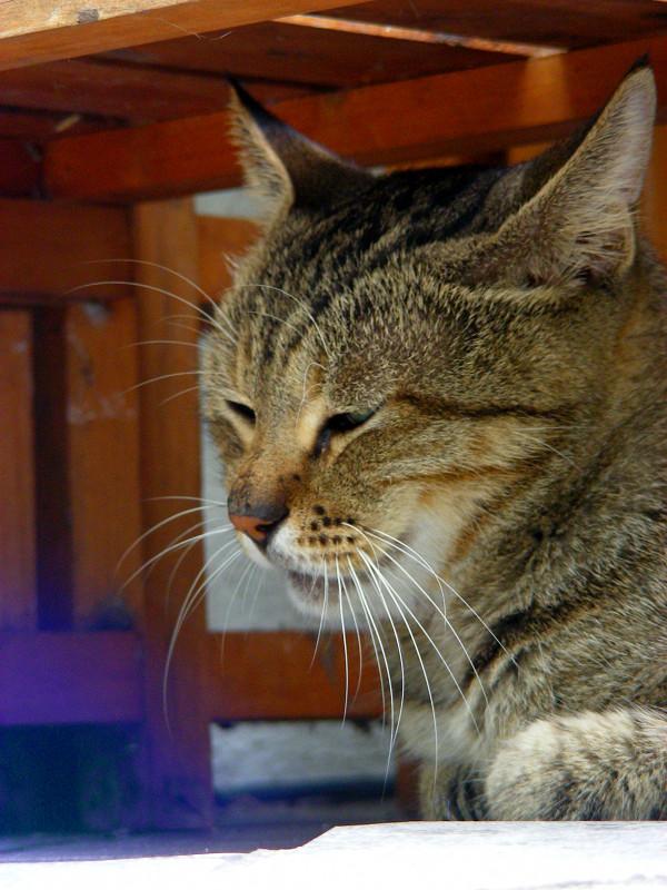 ベンチの下のキジトラ猫3