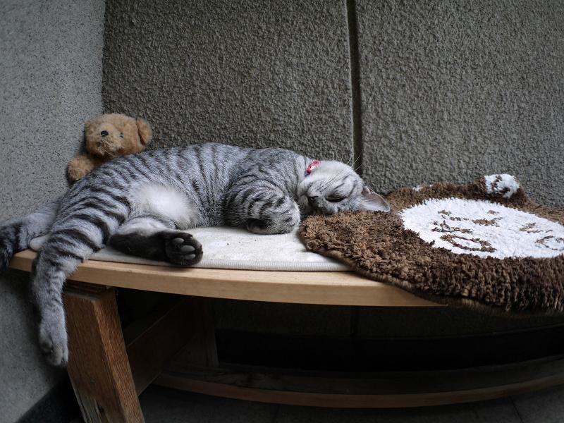 木製ベンチで寝ているサバトラ猫1