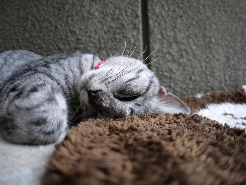 木製ベンチで寝ているサバトラ猫2