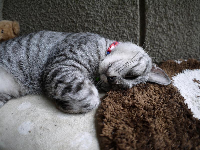 木製ベンチで寝ているサバトラ猫3