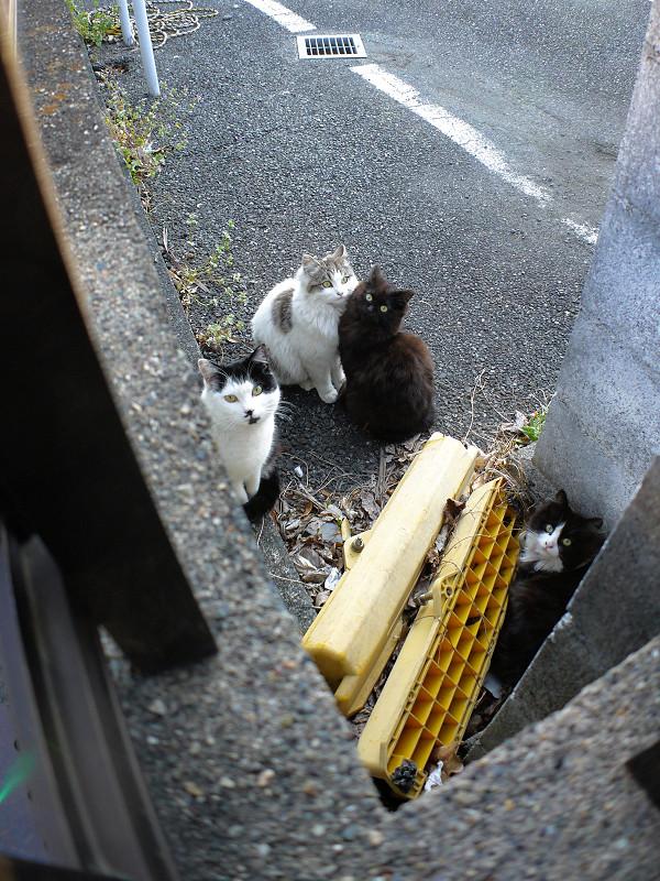 駐車場の隅っこの猫たち1