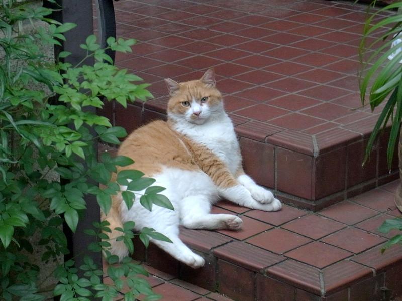 玄関先の茶白猫2