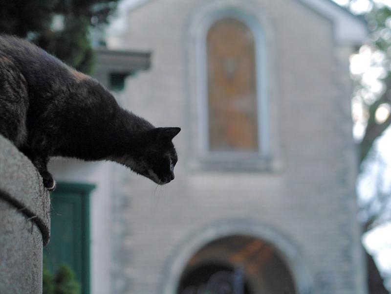 門柱から降りて来た黒サビ柄猫2