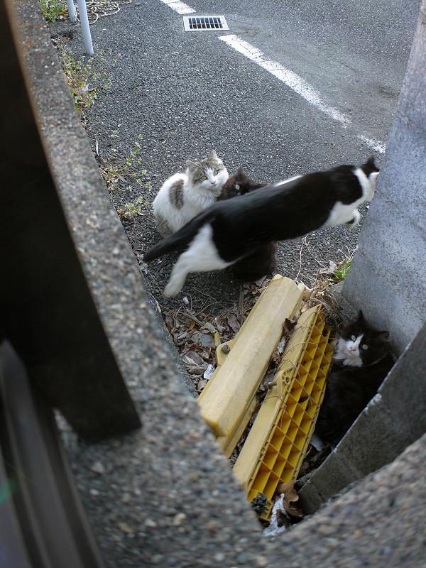 駐車場の隅っこの猫たち2