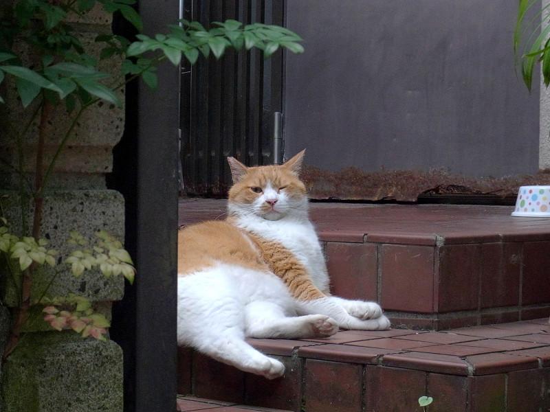 玄関先の茶白猫3