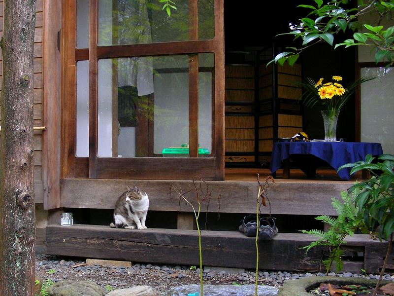 和風な居間とキジ白猫1