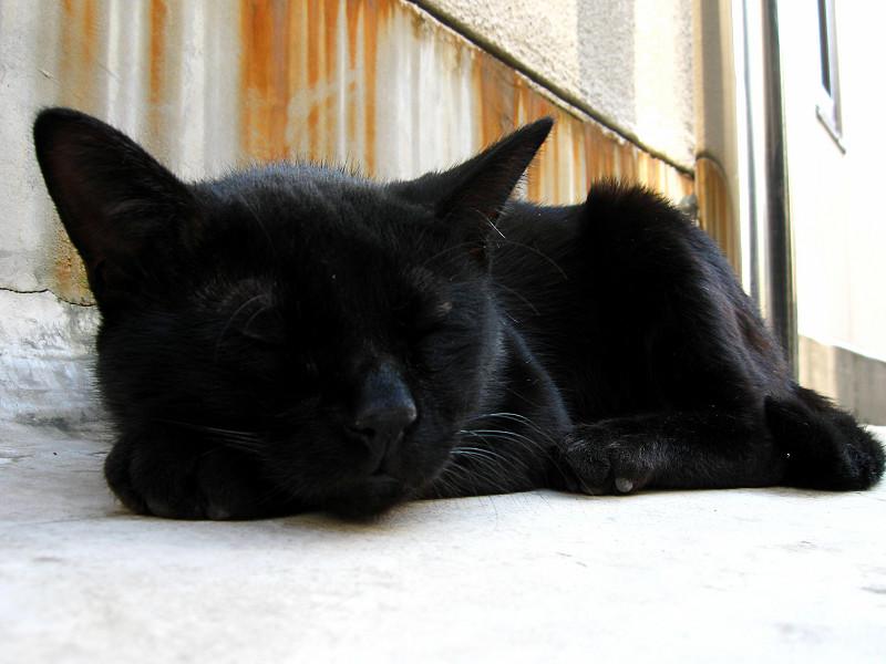 寝てる黒猫1