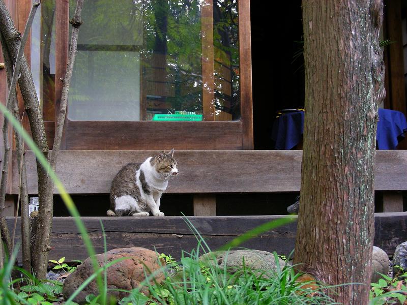 和風な居間とキジ白猫2